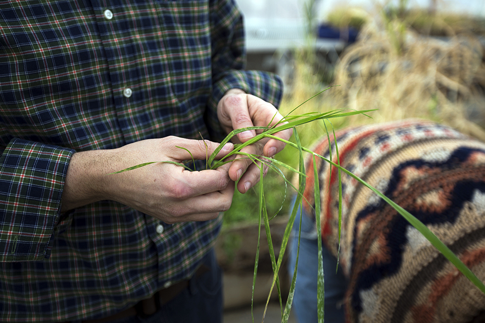 Agroecology photo